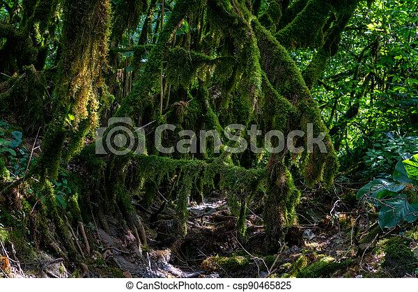 árbol, crecer, branches., musgo, encima de cierre - csp90465825