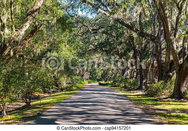 árbol forró camino - csp94157201