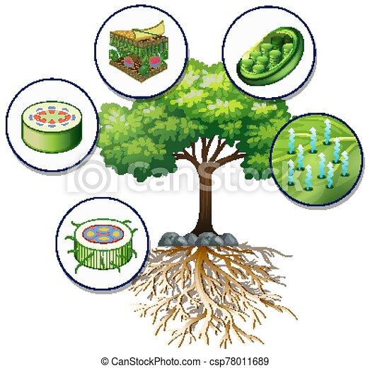 árbol grande, células, planta, verde, cierre - csp78011689