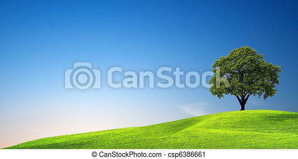 Árbol verde al atardecer - csp6386661