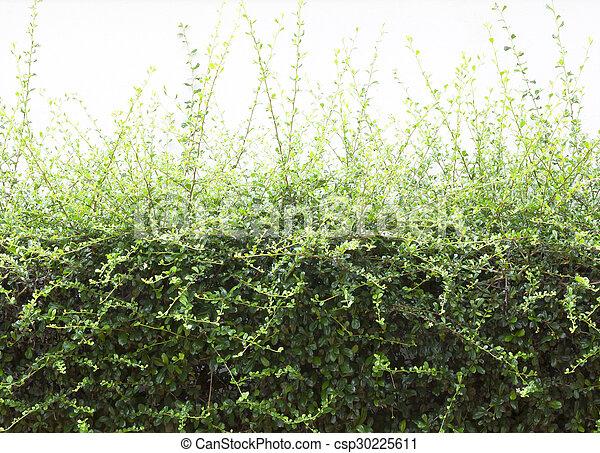 Árboles arbustos - csp30225611