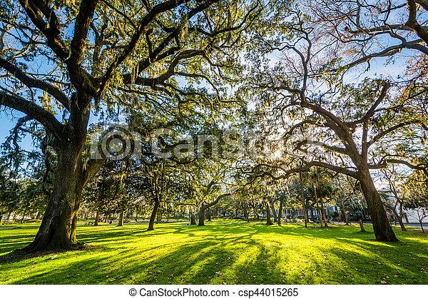 Árboles con musgo español, en el parque forsyth, en Savannah, Georgia. - csp44015265