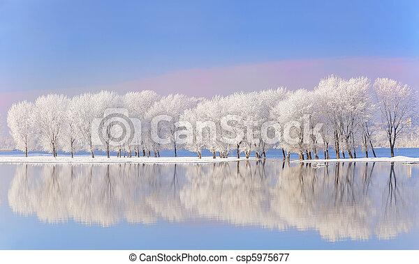 Árboles de invierno cubiertos de escarcha - csp5975677