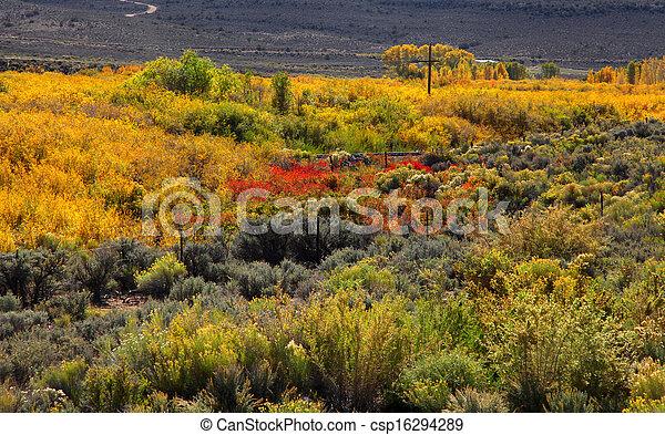 Árboles de otoño - csp16294289
