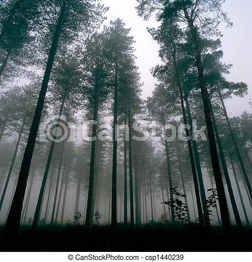 Árboles del bosque - csp1440239