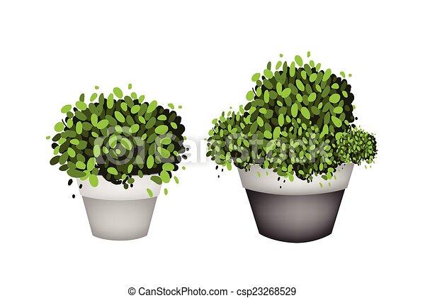 Árboles verdes en macetas de terracota sobre fondo blanco - csp23268529