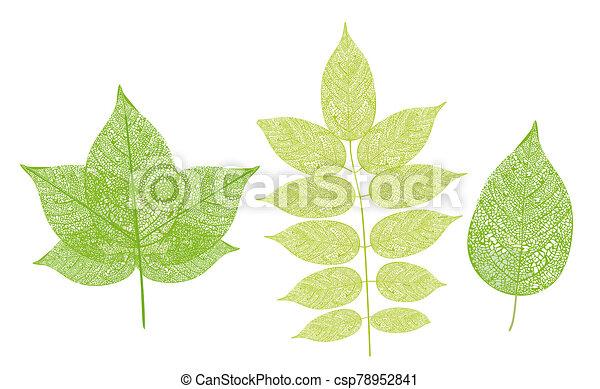 -, planta, componentes, hoja, ilustración - csp78952841