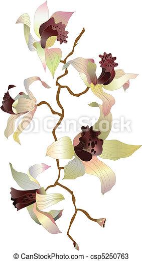 Orquídea 1 - csp5250763