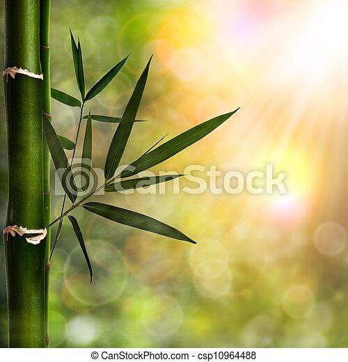 Abstraer los orígenes naturales con follaje de bambú - csp10964488
