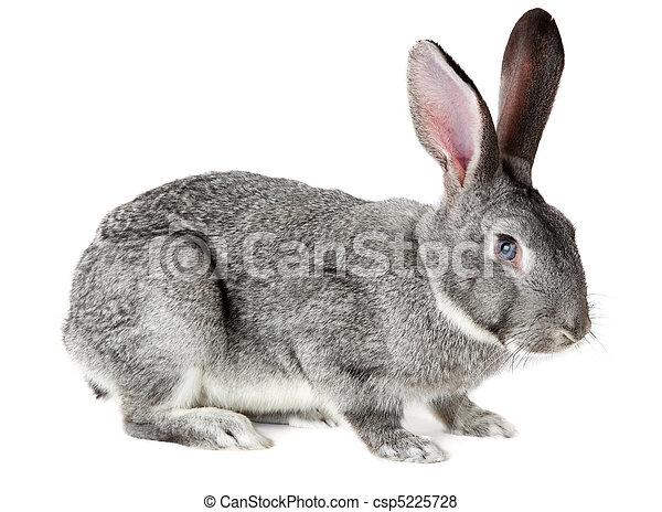 Un conejo adorable - csp5225728