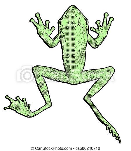 afuera, ilustración, corte, rana, verde - csp86240710
