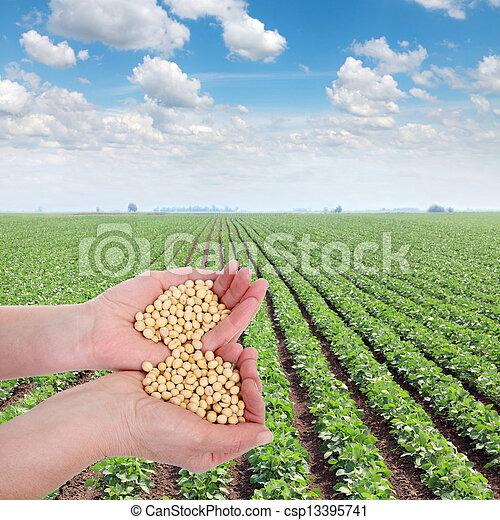 Agricultura - csp13395741