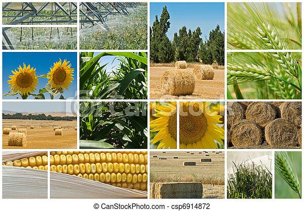Agricultura. - csp6914872