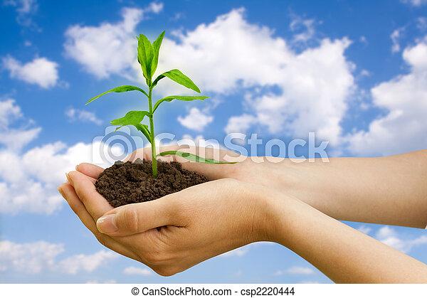 Agricultura. Planta en una mano - csp2220444