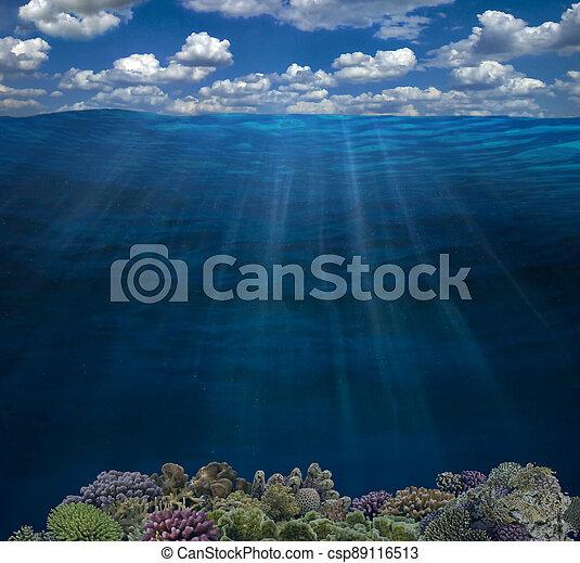 agua, fondo del mar, barrera coralina, submarino, superficie, cielo - csp89116513
