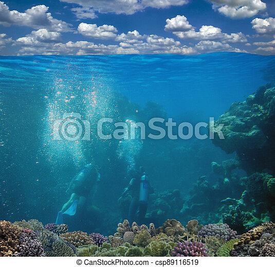 agua, fondo del mar, barrera coralina, submarino, superficie, cielo - csp89116519