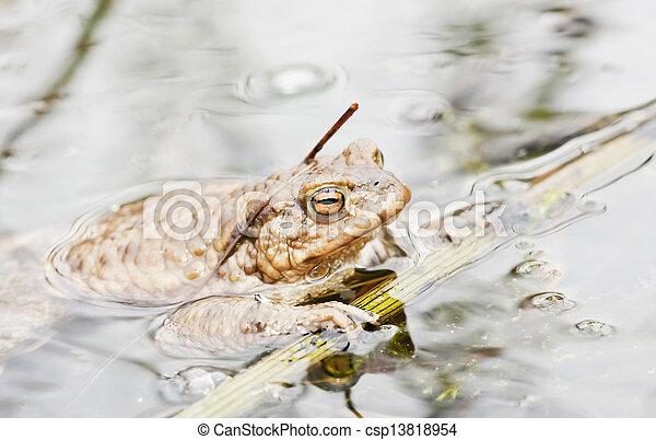 Rana en agua - csp13818954