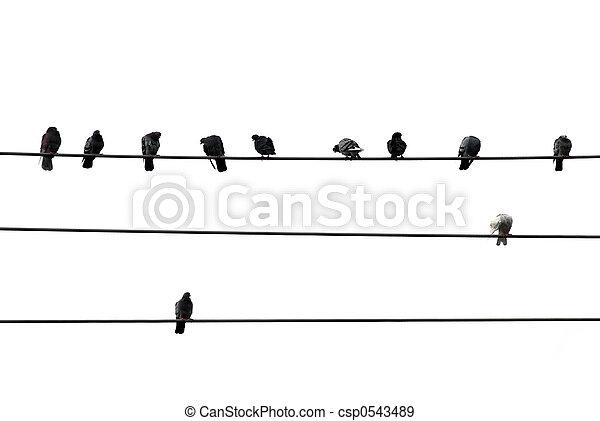 Pájaros conectados - csp0543489