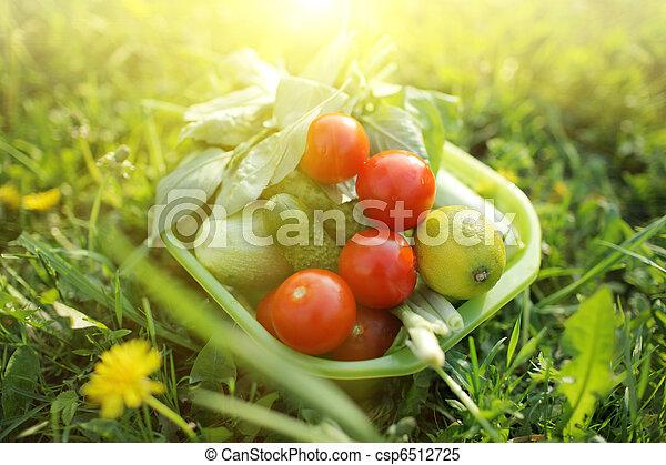 Comida orgánica al aire libre - csp6512725