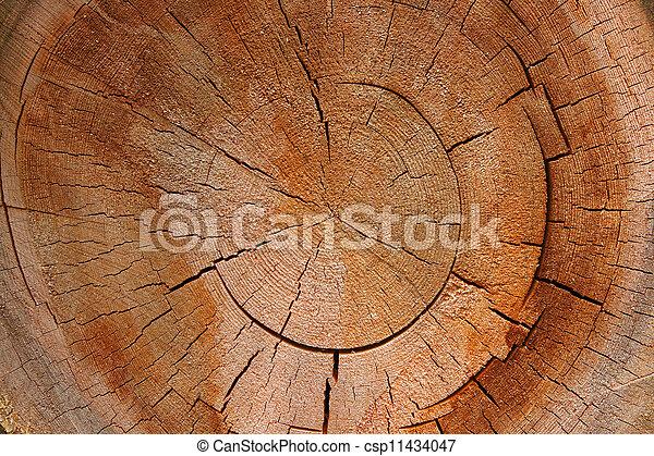 Anillo de crecimiento - seccion circular de un árbol - csp11434047