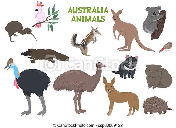 animales, australia, conjunto, vector, aislado, graphics., blanco, fondo. - csp80889122