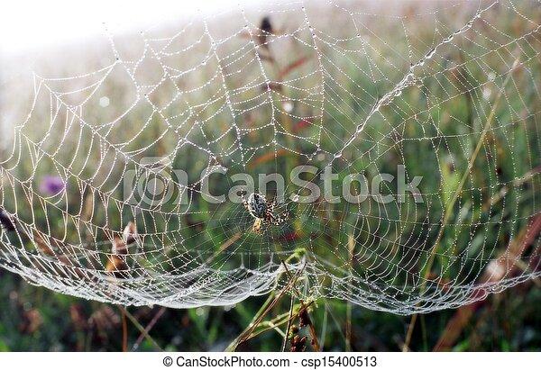 Araña esperando - csp15400513
