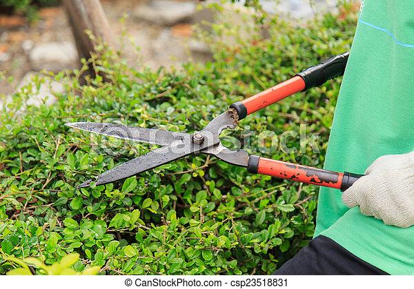 Arbustos en el jardín. - csp23518831
