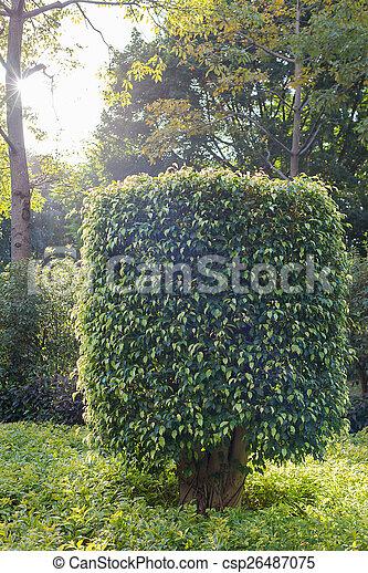 Arbustos en el parque - csp26487075