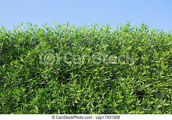 arbustos verdes - csp17431508