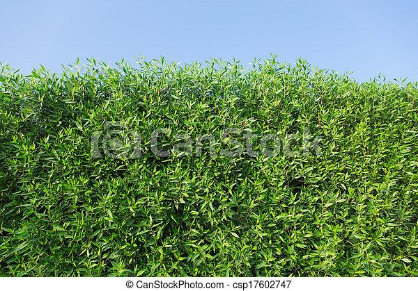 arbustos verdes - csp17602747