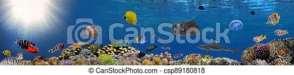 arrecife, submarino, panorama, coral, colorido, escuela, pez, tropical - csp89180818