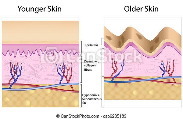 Arrugado contra suave piel - csp6235183