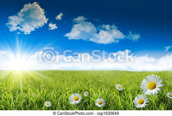 margaritas salvajes en la hierba con un cielo azul - csp1630649