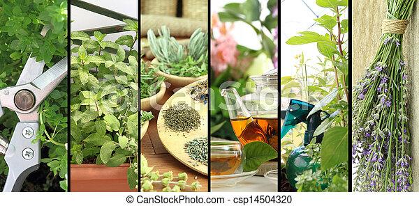 Banners de hierbas frescas en el jardín del balcón - csp14504320