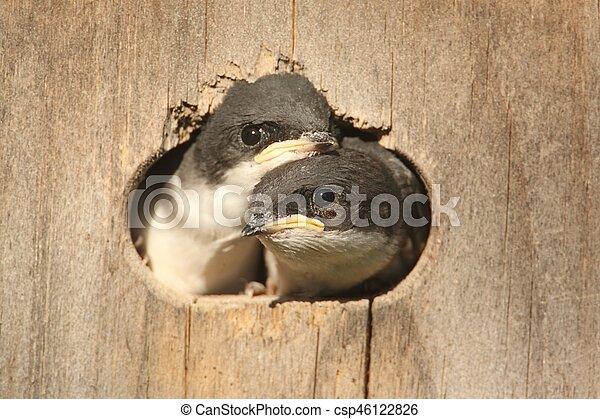 Pájaros en una casa de pájaros - csp46122826