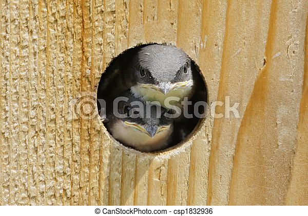 Pájaros en un pajar - csp1832936