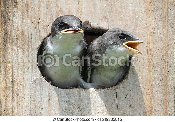 Pájaros en una casa de pájaros - csp49335815