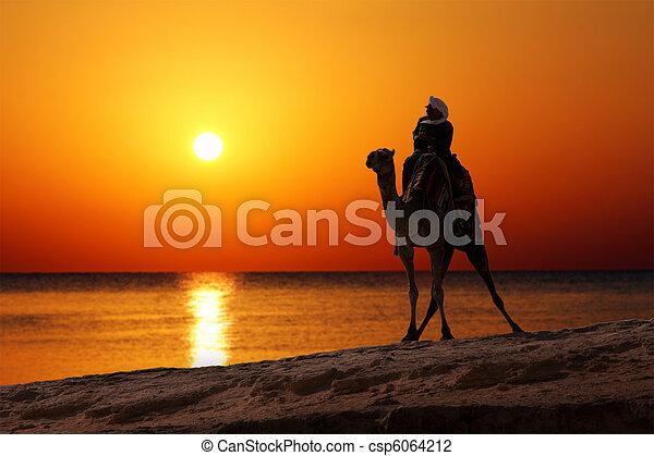 Bedouin en camello silueta contra el amanecer - csp6064212