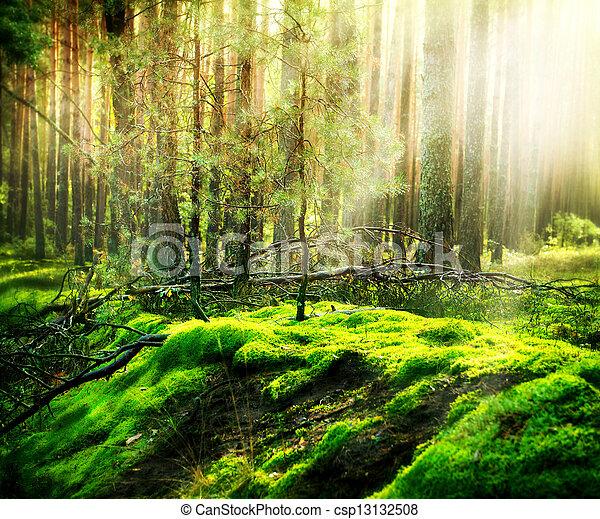 Bosque - csp13132508