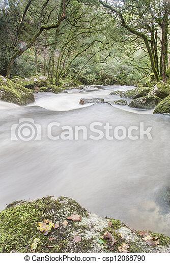 rio que fluye rápido en bosques, dardomoor, Reino Unido. - csp12068790