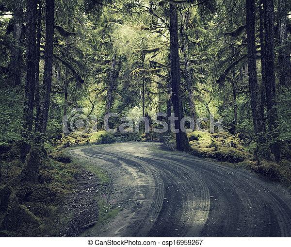 Bosque de lluvia con un camino de tierra - csp16959267