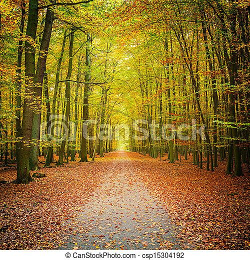 Bosque de otoño - csp15304192