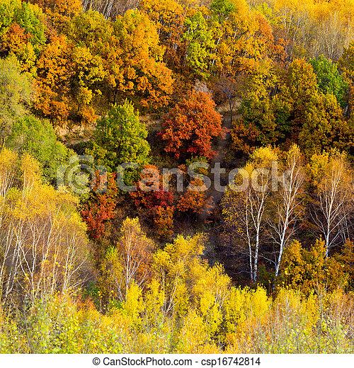 Bosque de otoño - csp16742814