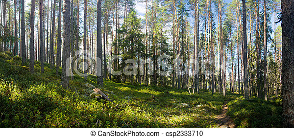 Bosque de verano - csp2333710
