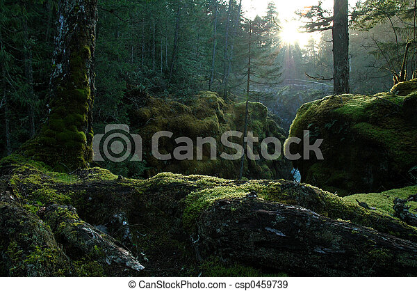 Bosque encantado - csp0459739