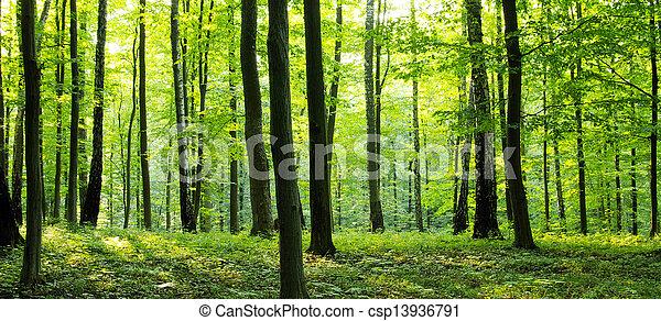 Bosque - csp13936791