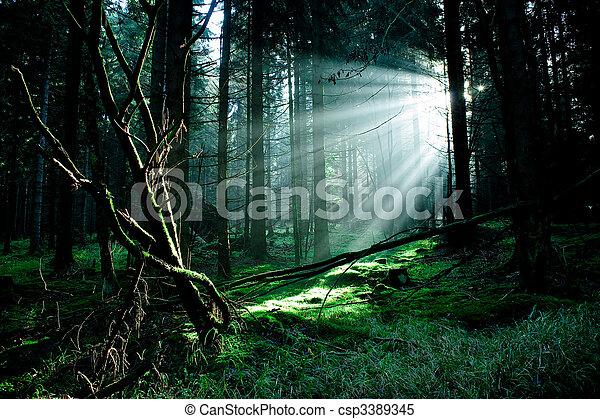 Bosque Misty - csp3389345