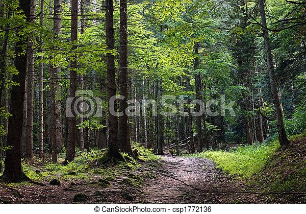 Bosque oscuro - csp1772136