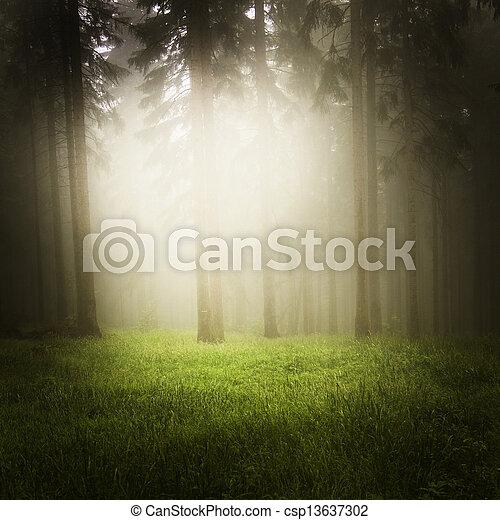 Bosque soñador - csp13637302