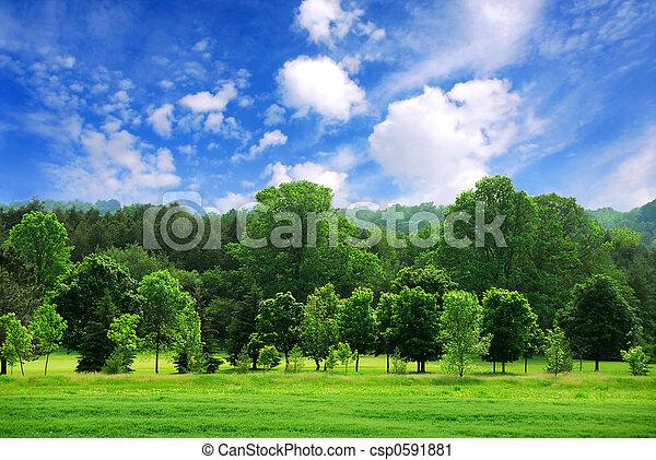 Bosque Verde - csp0591881